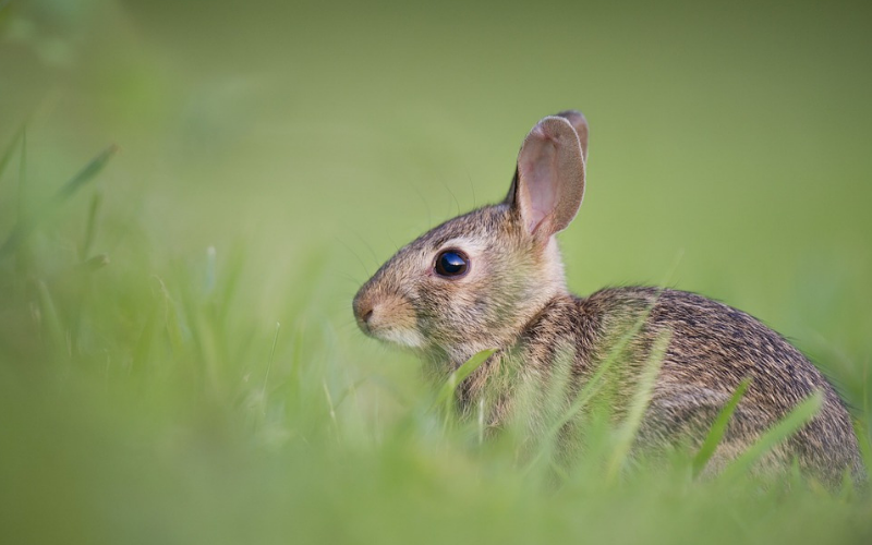 Picture of a cute bunny.